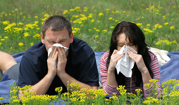 Allergies and Hay Fever
